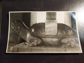 民国北京明陵中石龟照片一张