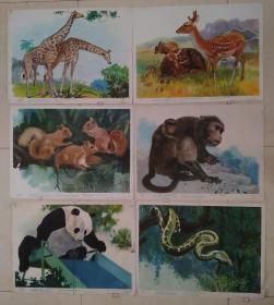 幼儿认识自然教学挂图  野兽 (6张) 哈琼文 画 上海教育出版社