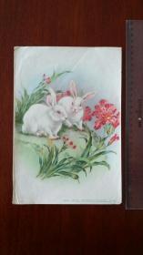 1957何逸梅画 小白兔