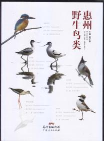 惠州野生鸟类