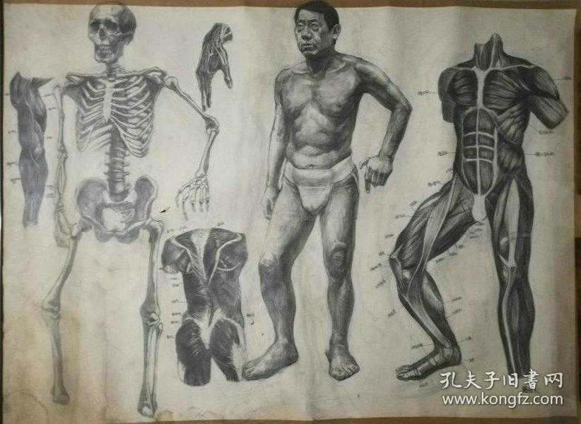 带款的一幅画家大幅素描-男人体,笔法细致,品相较好