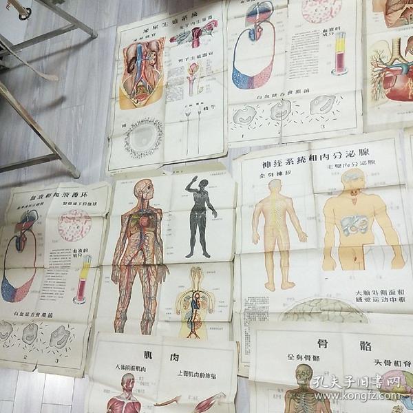 50年代医疗宣传画11张合售