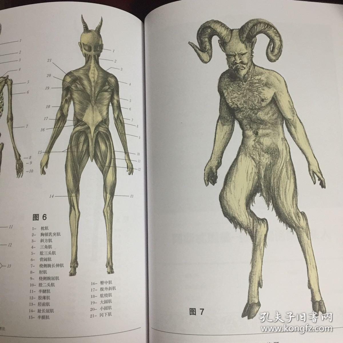 绝迹动物古抄本——斯宾塞·布莱克医生的解剖手记