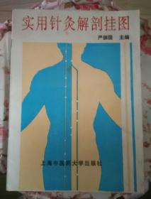 实用针灸解剖挂图(中文版说明书)(16开