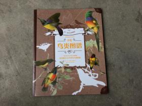 手绘鸟类图谱