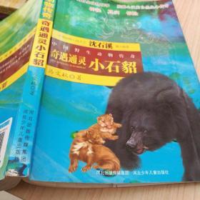 中国野生动物传奇   奇遇通灵  小石貂