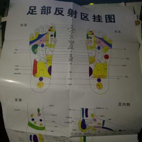 足部(脚底)穴位反射区图【配有治疗书一册】