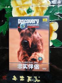 Discovery探索频道:忠实伴侣 VCD