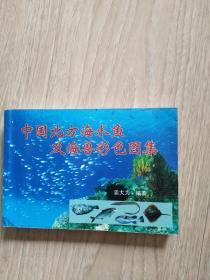 中国北方海水鱼及海兽彩色图集