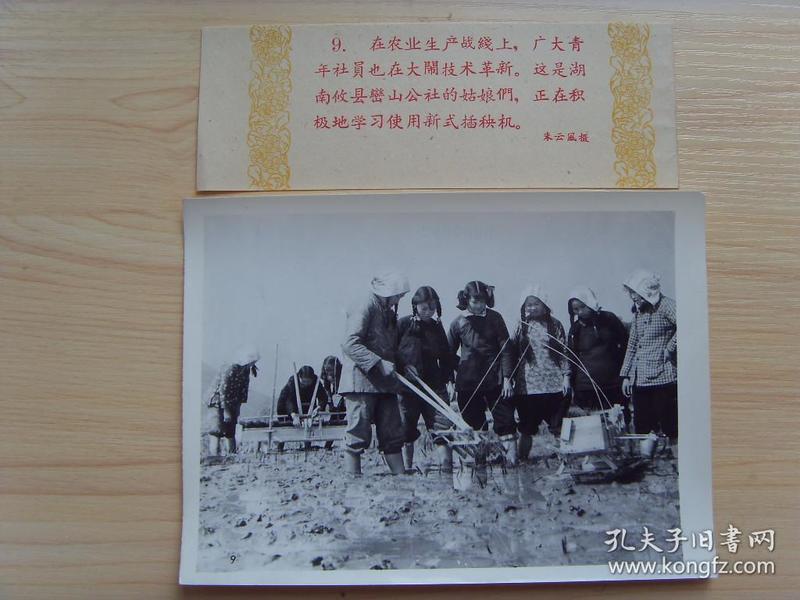老照片:【※1960年,湖南株洲市攸县鸾山公社,姑娘们在使用新式插秧机※】