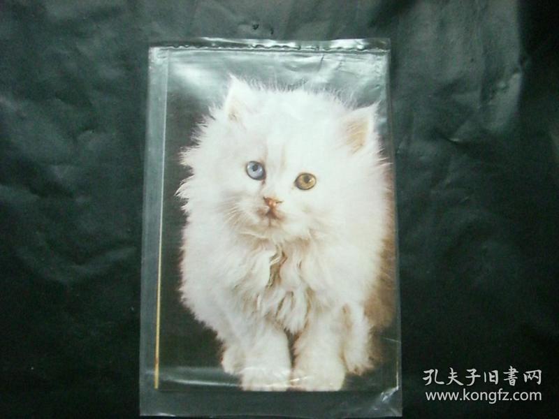 猫—明信片(6张全)