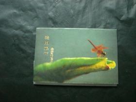 爱的浪花明信片(8张全)
