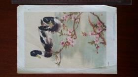 1957上海画片出版社 蒋风白绘《春溪浴鸭》