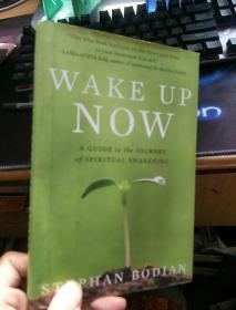 英文原版 Wake Up Now: A Guide to the Journey of Spiritual Awakening