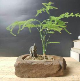 Natural stone rough stone flower pot plant flower stone pot bonsai