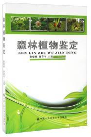 森林植物鉴定