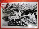 """【1976年唐山大地震原版照片之25,附文字说明:""""灾区人民在大灾中坚持生产自救,市郊种植的蔬菜喜获丰收""""】,1986年7月28日纪念唐山大地震十周年新华社用原版底片洗印。36.0厘米×26.0厘米。"""