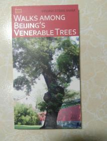 口袋本中国丛书:北京树之旅