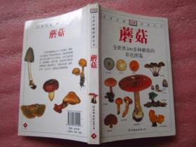 蘑菇——全世界500多种蘑菇的彩色图鉴  【铜版纸彩印、图文并茂、定价49元】保正版
