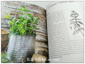 药疗植物家庭园艺 英文原版 Healing Houseplants: How to Keep Plants Indoors for Clean Air, Healthier Skin, Improved Focus, and a Happier Life!