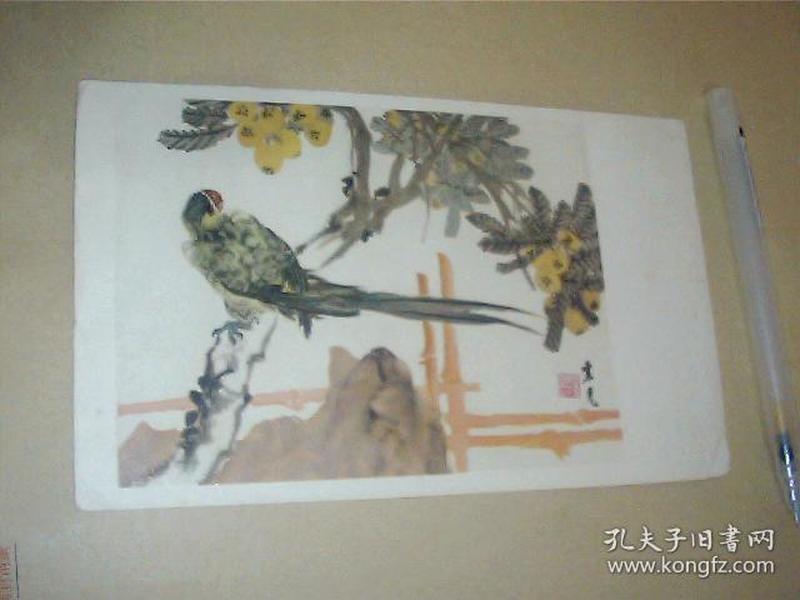 50年代小画片 鹦鹉 张聿光