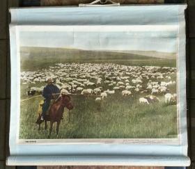 地球挂图.高级小学课本地理第二册教学挂图一轴:内蒙古草原牧场【有】