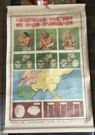 历史教学挂图一轴.从猿到人挂图(第七图)人类体质形态的发展【有】