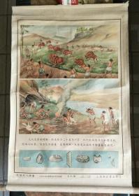 历史教学挂图一轴;从猿到人挂图(第九图)【有】