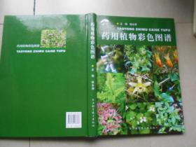 药用植物彩色图谱