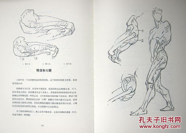 伯里曼肌肉_伯里曼人体绘画教程全集(套装共5册)全新正版 实物照片 附内页图