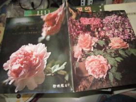 中国牡丹花展览
