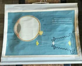 卫生和保健教学挂图一轴:学校卫生保健挂图(眼球的构造)【有】