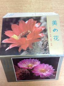 美の花 明信片