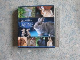 lexi guide des lapins
