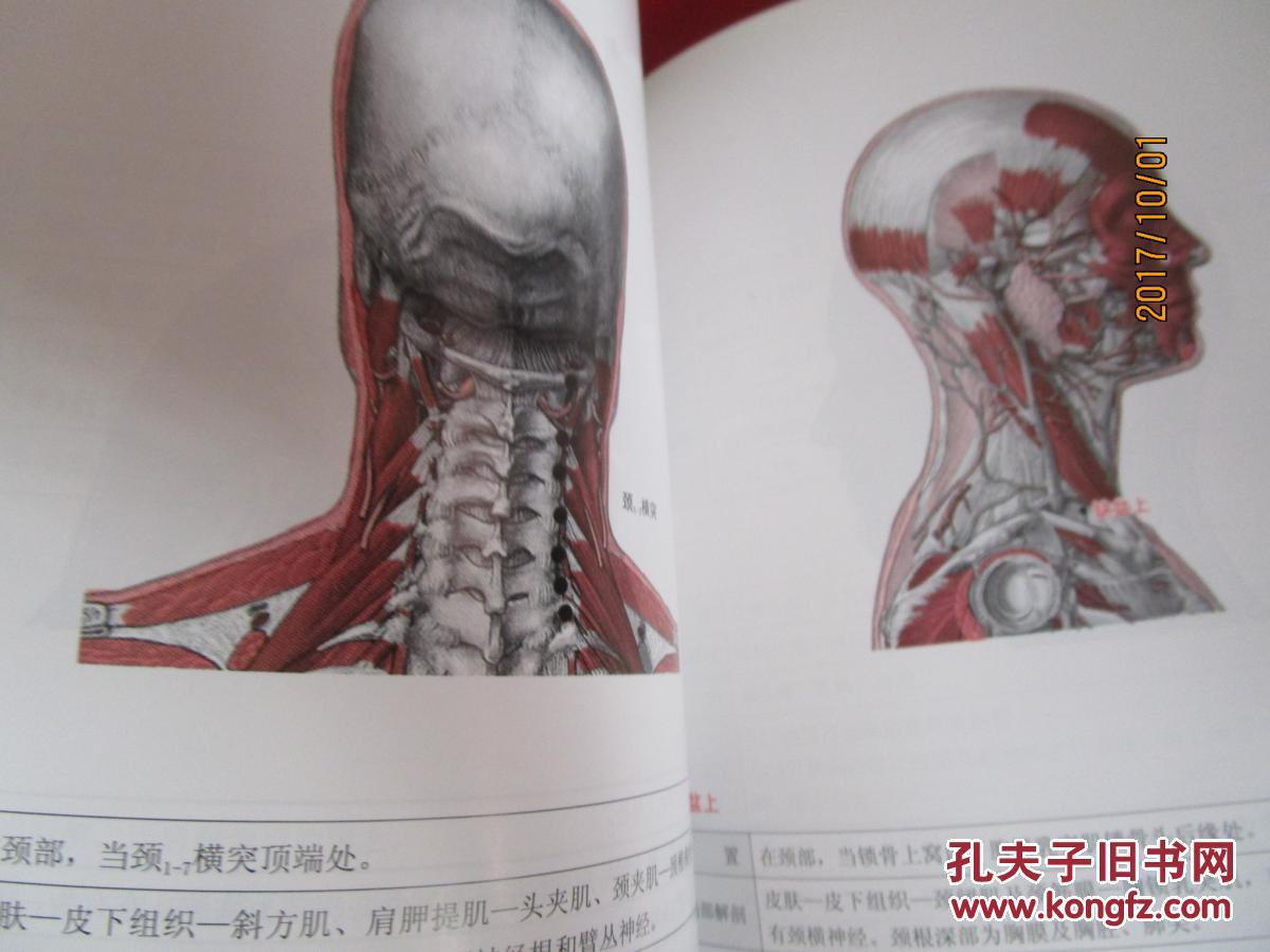 人体经筋循行地图 :; 图解学习人体十二经筋解剖,循行