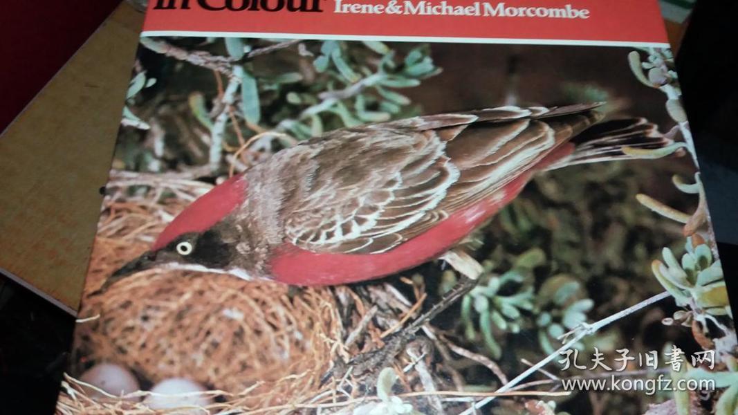 AUSTRALIAN BUSH  BIRDS IN COLOUR