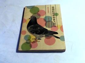 信鸽的饲养和竞飞训练
