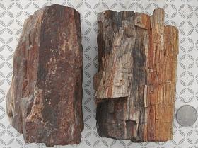 木化石2块