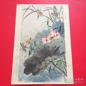 1958年,老画片,唐云《荷花翠鸟》
