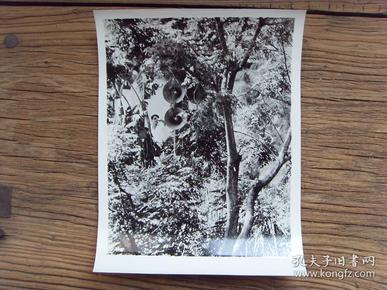 超大尺寸老照片:【※ 1979年,对越自卫反击战----越南侵略者在边境一带,安装高音喇叭,干扰我人民正常生活 ※】