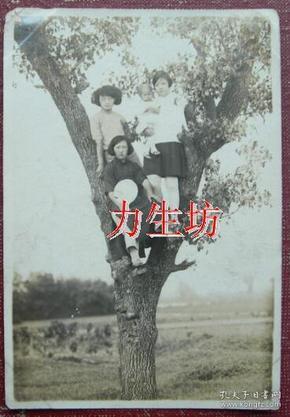民国老照片:  民国旗袍美女,戴眼镜者、持扇者、抱小孩者——上树啦!奇葩~ 《陌上》