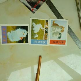 小明信片三张