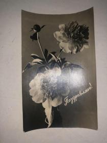 60年代 苏联照片式老明信片 花卉