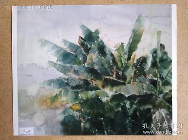 水粉画参展作品签名照片 《初夏之蕉》作者:陆怡佳
