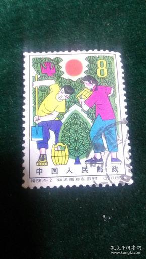 特66知识青年在农村4-2种树
