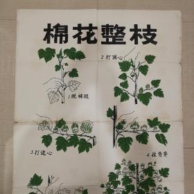 1960年棉花整枝手绘图出版原稿一幅大开