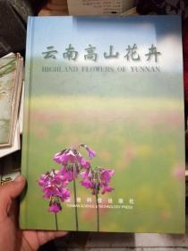 云南高山花卉