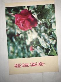 老贺年卡 恭贺新年 红玫瑰 河北人民美术出版社