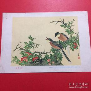1957年,老画片,江圣华《凌霄山雀》