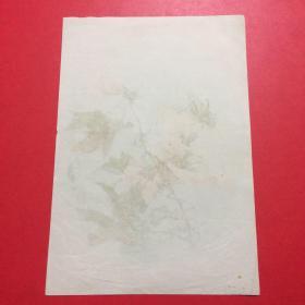 1958年,老画片,李咏森《蔷薇花》